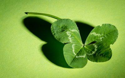 Je čtyřlístek opradu to, co Vám přinese štěstí?